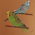 Budgies by Denise Nijs