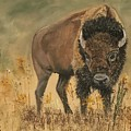 Buff Buffalo  by Peggy Paulson