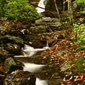 Buff Creek Falls by Shari Jardina