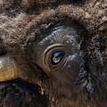 Buff Eye by Skip Willits