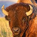 Buff In The Badlands by Jeffrey Hamilton