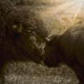 Buffalo Love by Amanda Smith