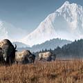 Buffalo Grazing by Daniel Eskridge