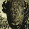 Buffalo Head by Astley David Middleton Cooper