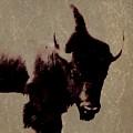 Buffalo Head  by Barbara Henry