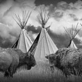 Buffalo Herd Among Teepees Of The Blackfoot Tribe by Randall Nyhof