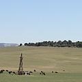 Buffalo Herd by Rich Bodane