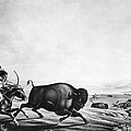 Buffalo Hunt, C1830 by Granger