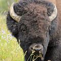 Buffalo In Flowers by Wendy Fox
