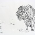 Buffalo Mom And Calves by Gregory Hayes