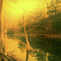 Buffalo River In Gold by Nina Fosdick