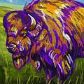 Buffalo by Tim Gilliland