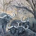 Buffaloes In The Bushveld by Caroline Street