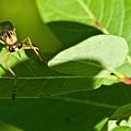 Bug Eyes by Douglas Barnett