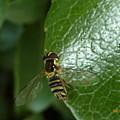 bug by Manuel Sanchez
