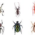 Bug Series Underbelly Set by Clayton Bastiani