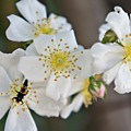 Bugaboo Apple Blossoms by Lilliana Mendez
