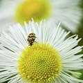 Bugged Flower by Becky Baysden