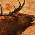 Bugling Bull Elk Autumn Background by Dan Sproul