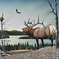 Bugling Elk by Don Engler