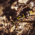 Bugs Life by Jorgo Photography - Wall Art Gallery