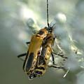 Bugz In Spring by BS Garvin