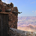 Building On The Grand Canyon Ridge by David Arment
