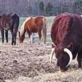 Bull And Horses, Mt. Vernon by David Rubinstein