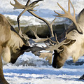 Bull Elk Fighting  by Jeelan Clark