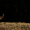 Bull Elk-signed-#0266 by J L Woody Wooden