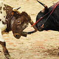 Bull Fight by Rafa Rivas