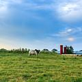 Bull In An East Texas Field by Abe