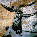 Bull: Lascaux, France by Granger