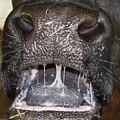 Bull Nose by Bob Slitzan