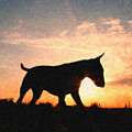 Bull Terrier At Sunset by Michael Tompsett