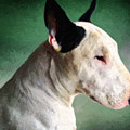 Bull Terrier On Green by Michael Tompsett