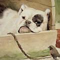 Bulldog by Cecil Charles Windsor Aldin
