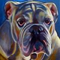 Bulldog Expression 2 by Kaytee Esser