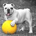 Bulldog Soccer by Billy Soden