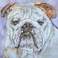 Bulldog - Watercolor Portrait.5 by Fabrizio Cassetta