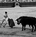 Bullfighting 22b by Andrew Fare