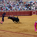 Bullfighting 35 by Andrew Fare