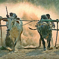 Bullock Cart Race by Shreeharsha Kulkarni