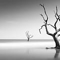 Boneyard Beach Iv by Ivo Kerssemakers
