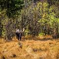 Bullwinkle by Jon Burch Photography
