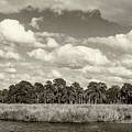 Bulow Plantation Ruins Historic State Park by Stefan Mazzola
