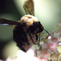 Bumblbee Bzzz by Curtis J Neeley Jr