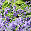 Bumble Bee by Alicia Espinosa