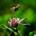 Bumble Bee by Christine Scott