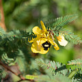 Bumblebee Deep Into Work by JR Cox